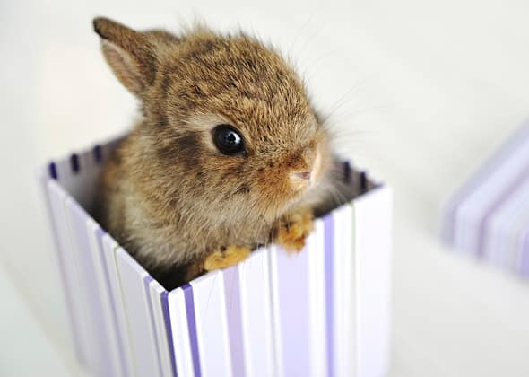 The Ultimate Baby Rabbit Guide - The Bunny Lowdown