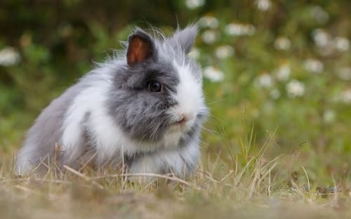Do I Have an Unhappy Rabbit? (Here Are 4 Signs So You Can ...