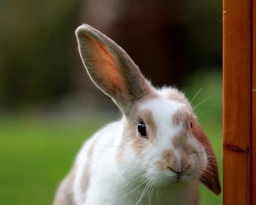 62 Rabbit Facts that You Might Not Know - The Bunny Lowdown